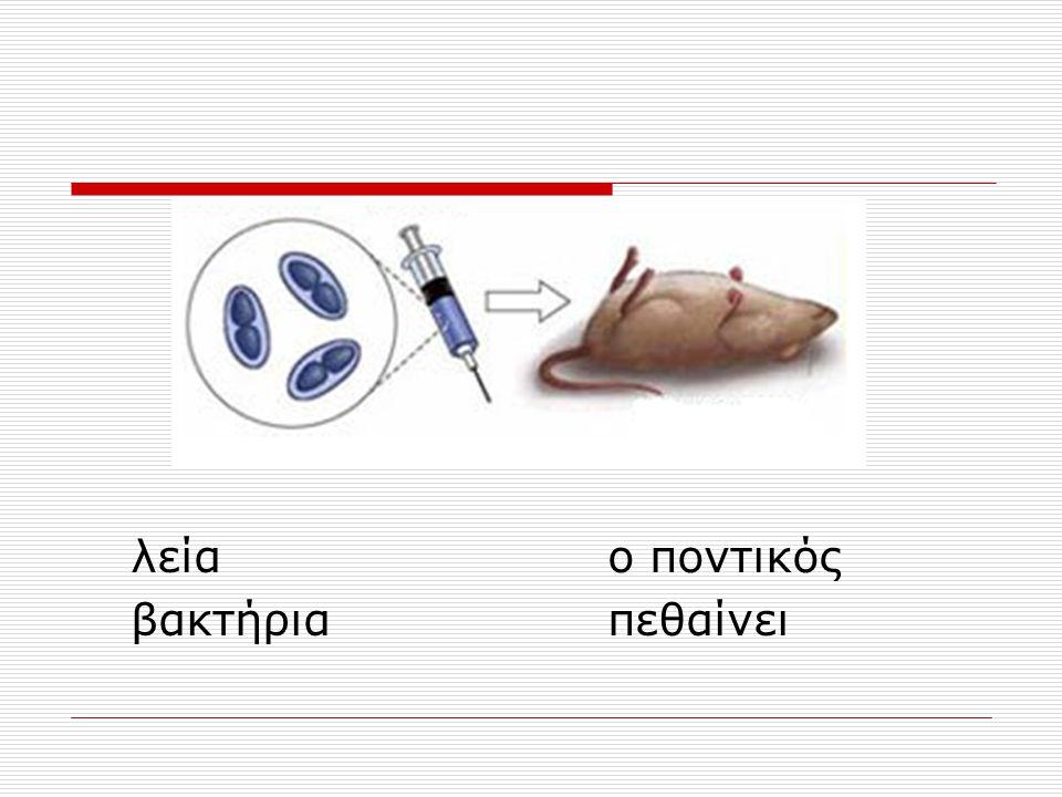 Βακτηριοφάγος Τ2 & ιχνηθέτηση 35 S Ενσωματώνεται μόνο στις πρωτεϊνες 32 P Ενσωματώνεται μόνο στο DNA Μόνο το DNA εισέρχεται στα βακτηριακά κύτταρα και είναι ικανό να δώσει εντολές για να πολλαπλασιαστούν και να παραχθούν νέοι φάγοι