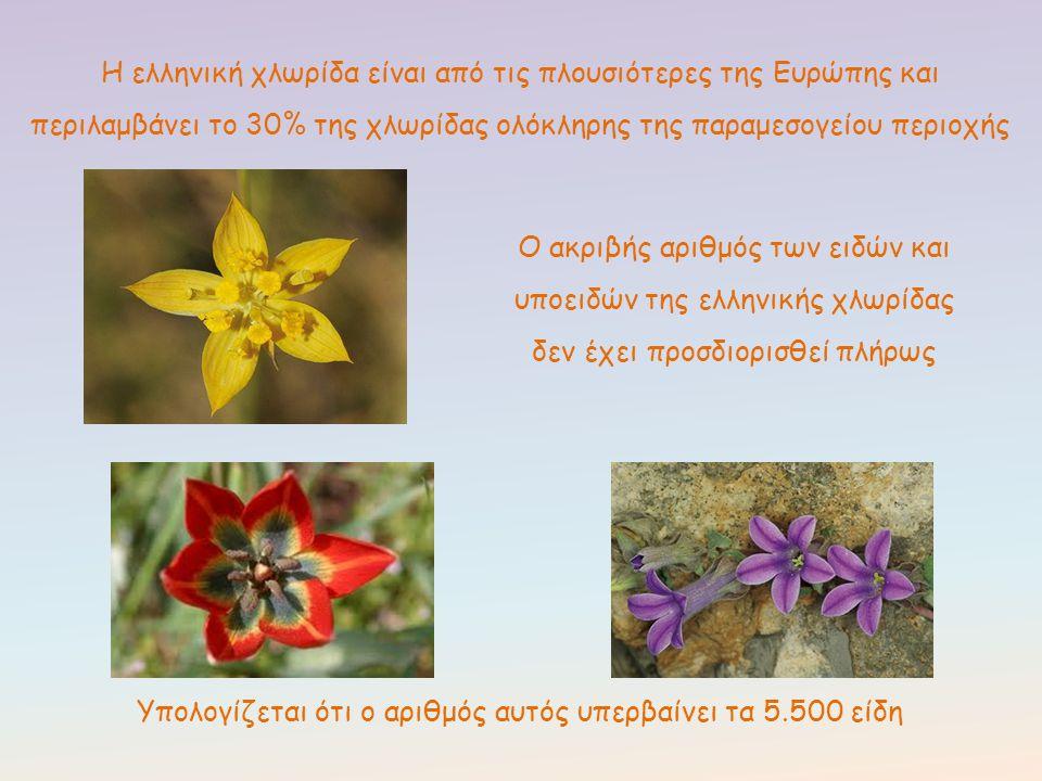 Η ελληνική χλωρίδα είναι από τις πλουσιότερες της Ευρώπης και περιλαμβάνει το 30% της χλωρίδας ολόκληρης της παραμεσογείου περιοχής Ο ακριβής αριθμός