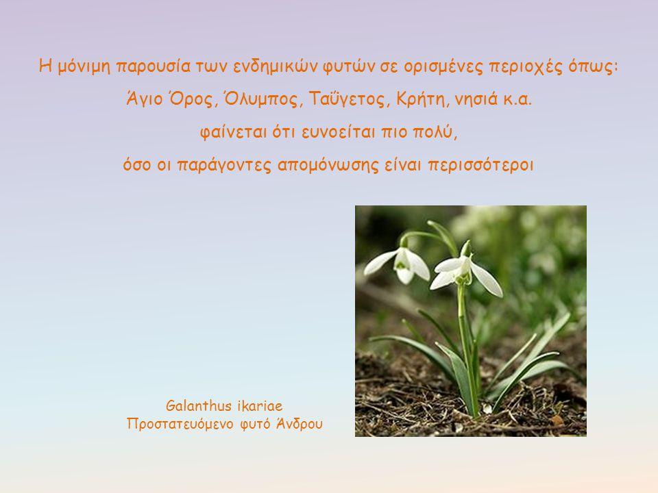 Η μόνιμη παρουσία των ενδημικών φυτών σε ορισμένες περιοχές όπως: Άγιο Όρος, Όλυμπος, Ταΰγετος, Κρήτη, νησιά κ.α. φαίνεται ότι ευνοείται πιο πολύ, όσο