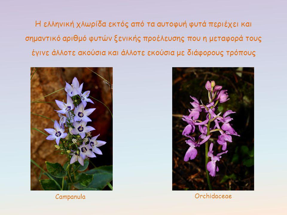 Η ελληνική χλωρίδα εκτός από τα αυτοφυή φυτά περιέχει και σημαντικό αριθμό φυτών ξενικής προέλευσης που η μεταφορά τους έγινε άλλοτε ακούσια και άλλοτ