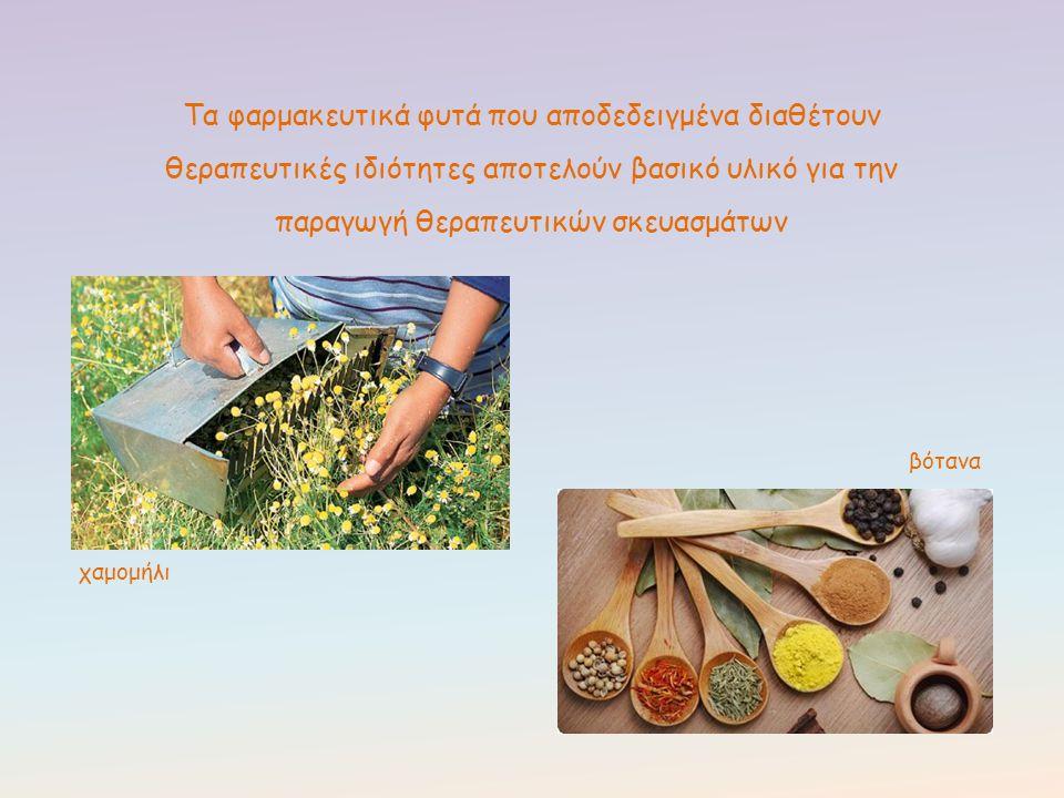 Τα φαρμακευτικά φυτά που αποδεδειγμένα διαθέτουν θεραπευτικές ιδιότητες αποτελούν βασικό υλικό για την παραγωγή θεραπευτικών σκευασμάτων χαμομήλι βότα