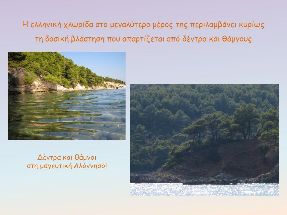 Η ελληνική χλωρίδα στο μεγαλύτερο μέρος της περιλαμβάνει κυρίως τη δασική βλάστηση που απαρτίζεται από δέντρα και θάμνους Δέντρα και θάμνοι στη μαγευτ
