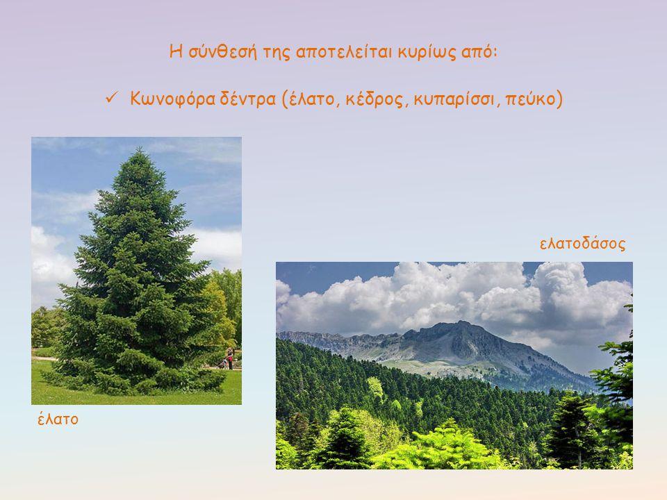 Η σύνθεσή της αποτελείται κυρίως από: Κωνοφόρα δέντρα (έλατο, κέδρος, κυπαρίσσι, πεύκο) έλατο ελατοδάσος