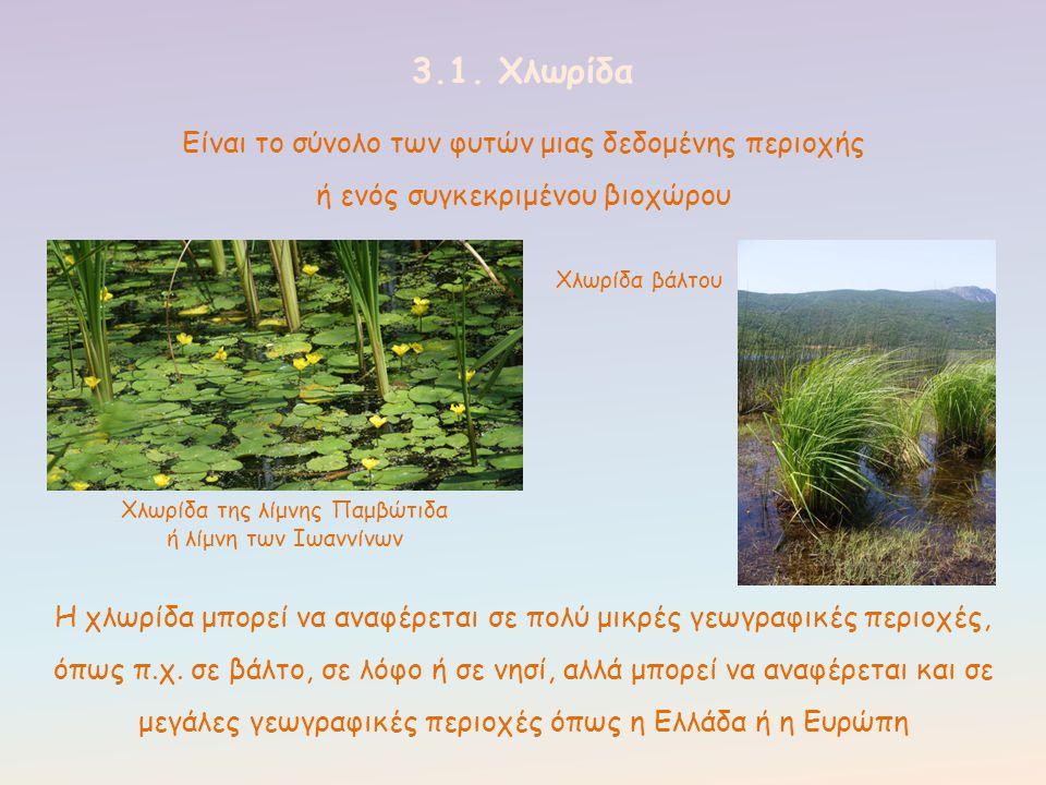 3.1. Χλωρίδα Είναι το σύνολο των φυτών μιας δεδομένης περιοχής ή ενός συγκεκριμένου βιοχώρου Χλωρίδα της λίμνης Παμβώτιδα ή λίμνη των Ιωαννίνων Χλωρίδ