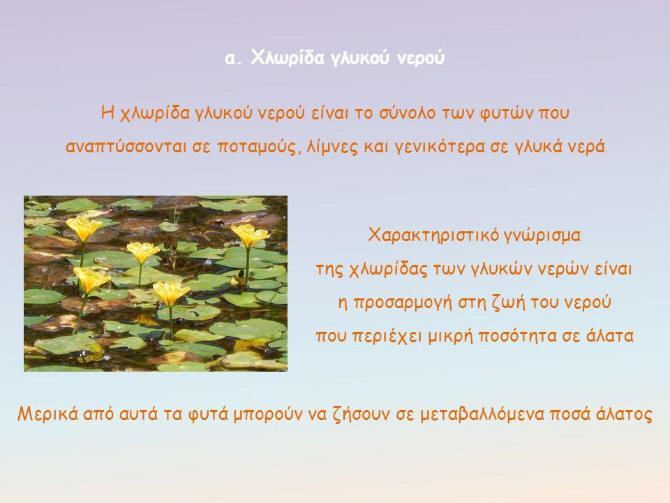Η χλωρίδα γλυκού νερού είναι το σύνολο των φυτών που αναπτύσσονται σε ποταμούς, λίμνες και γενικότερα σε γλυκά νερά α. Χλωρίδα γλυκού νερού Χαρακτηρισ