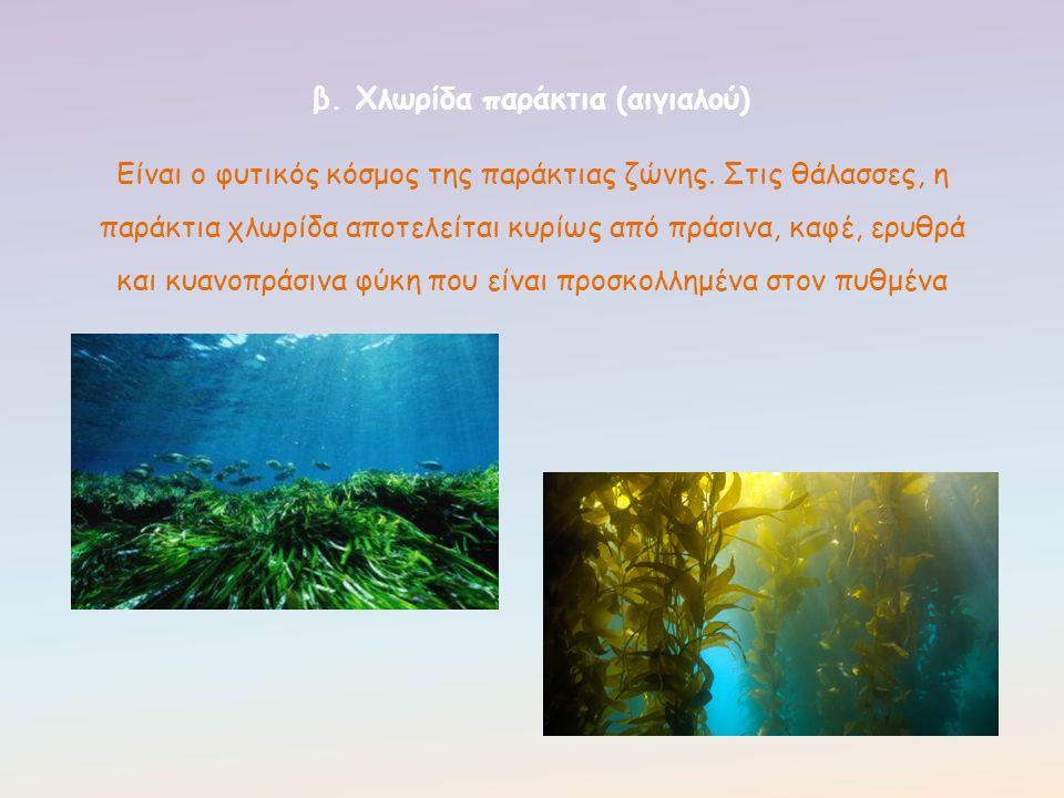Είναι ο φυτικός κόσμος της παράκτιας ζώνης. Στις θάλασσες, η παράκτια χλωρίδα αποτελείται κυρίως από πράσινα, καφέ, ερυθρά και κυανοπράσινα φύκη που ε