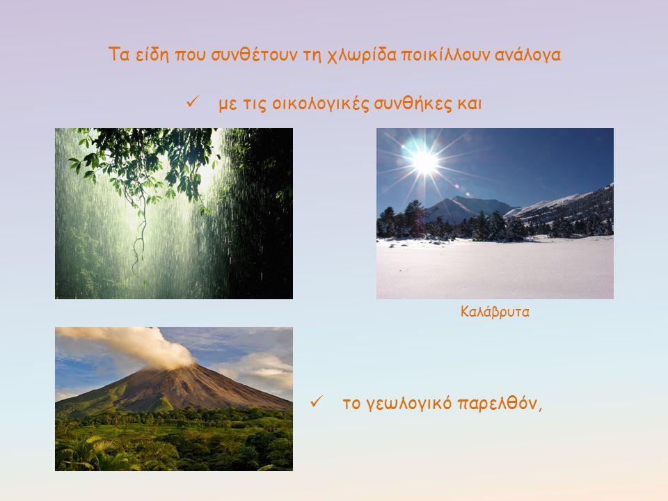 Σαντορίνη Η ηφαιστειακή δράση του παρελθόντος διαμόρφωσε τη χλωρίδα του νησιού