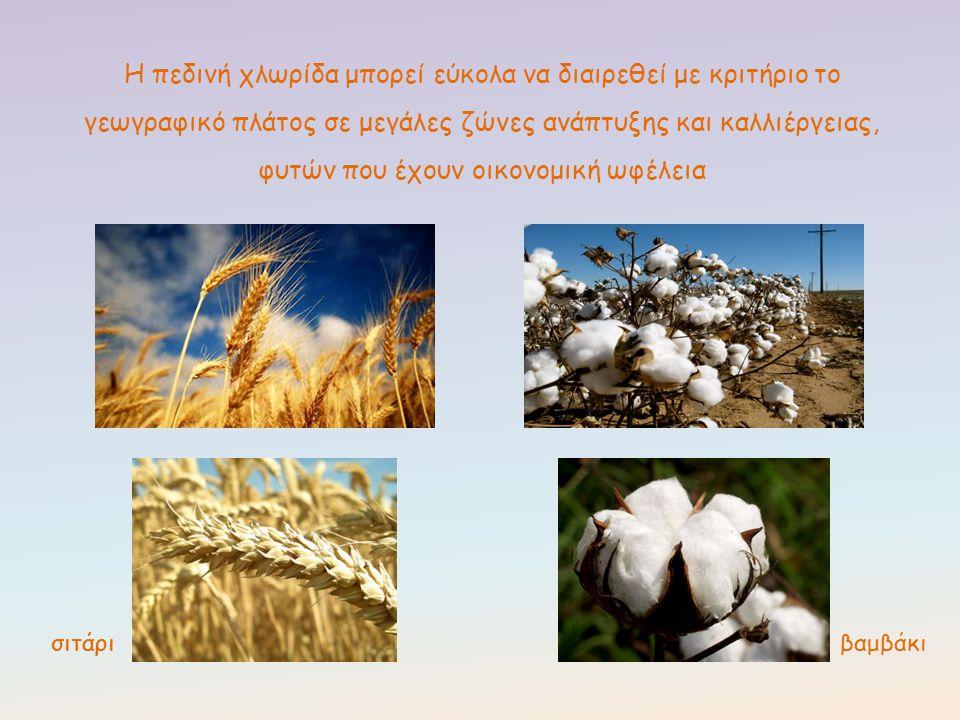 Η πεδινή χλωρίδα μπορεί εύκολα να διαιρεθεί με κριτήριο το γεωγραφικό πλάτος σε μεγάλες ζώνες ανάπτυξης και καλλιέργειας, φυτών που έχουν οικονομική ω