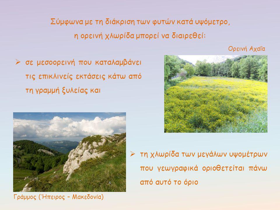 Σύμφωνα με τη διάκριση των φυτών κατά υψόμετρο, η ορεινή χλωρίδα μπορεί να διαιρεθεί:  σε μεσοορεινή που καταλαμβάνει τις επικλινείς εκτάσεις κάτω απ