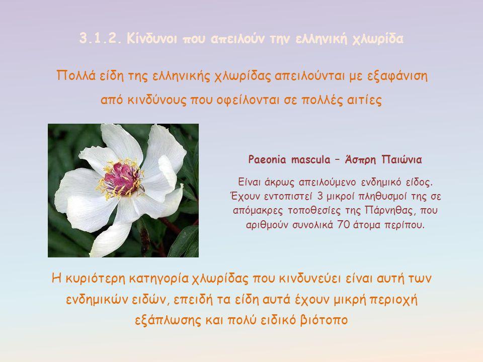 Πολλά είδη της ελληνικής χλωρίδας απειλούνται με εξαφάνιση από κινδύνους που οφείλονται σε πολλές αιτίες 3.1.2. Κίνδυνοι που απειλούν την ελληνική χλω