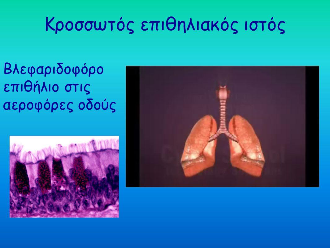 Κροσσωτός επιθηλιακός ιστός Βλεφαριδοφόρο επιθήλιο στις αεροφόρες οδούς