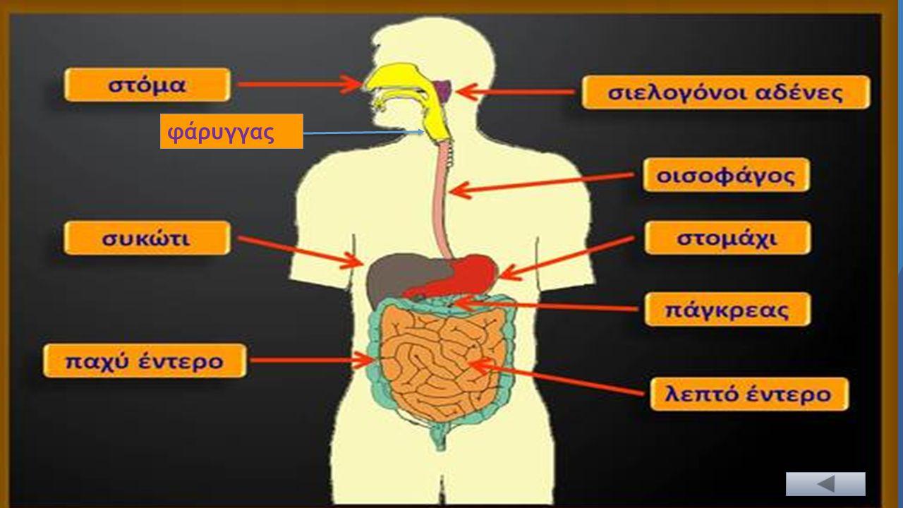 Το πάγκρεας παράγει χημικές ουσίες που εκκρίνονται στο δωδεκαδάκτυλο και χρησιμεύουν στη διάσπαση υδατανθράκων και πρωτεϊνών.