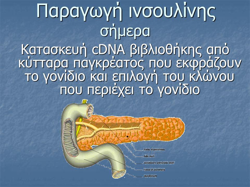 Παραγωγή ινσουλίνης σήμερα Κατασκευή cDNA βιβλιοθήκης από κύτταρα παγκρέατος που εκφράζουν το γονίδιο και επιλογή του κλώνου που περιέχει το γονίδιο