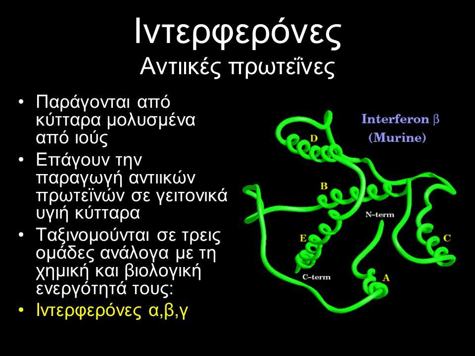 Ιντερφερόνες Αντιικές πρωτεΐνες Παράγονται από κύτταρα μολυσμένα από ιούς Επάγουν την παραγωγή αντιικών πρωτεϊνών σε γειτονικά υγιή κύτταρα Ταξινομούνται σε τρεις ομάδες ανάλογα με τη χημική και βιολογική ενεργότητά τους: Ιντερφερόνες α,β,γ