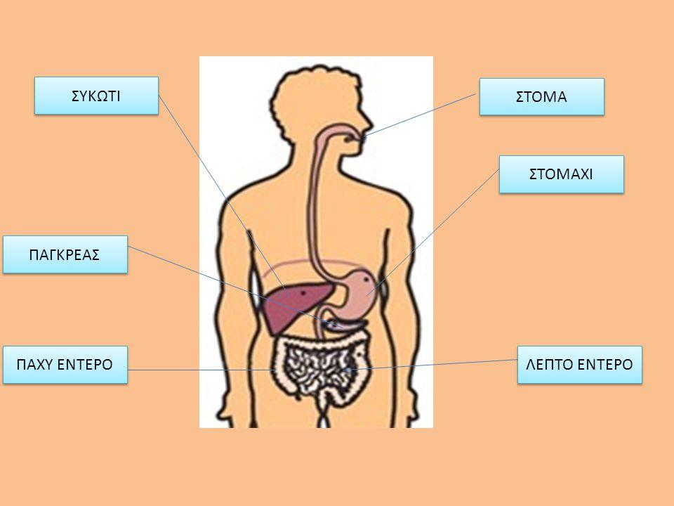 ΠΕΠΤΙΚΟ ΣΥΣΤΗΜΑ Η ΠΕΠΤΙΚΗ ΟΔΟΣ ΕΙΝΑΙ ΜΙΑ ΣΕΙΡΑ ΑΠΟ ΠΟΙΚΙΛΑ ΟΡΓΑΝΑ: Το στόμα Τον οισοφάγο Το στομάχι Το λεπτό και το παχύ έντερο Το Ήπαρ, το συκώτι και