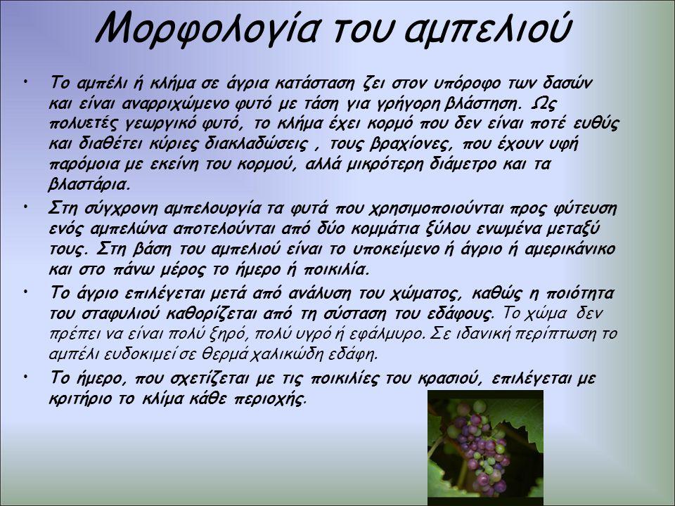Μορφολογία του αμπελιού Το αμπέλι ή κλήμα σε άγρια κατάσταση ζει στον υπόροφο των δασών και είναι αναρριχώμενο φυτό με τάση για γρήγορη βλάστηση. Ως π