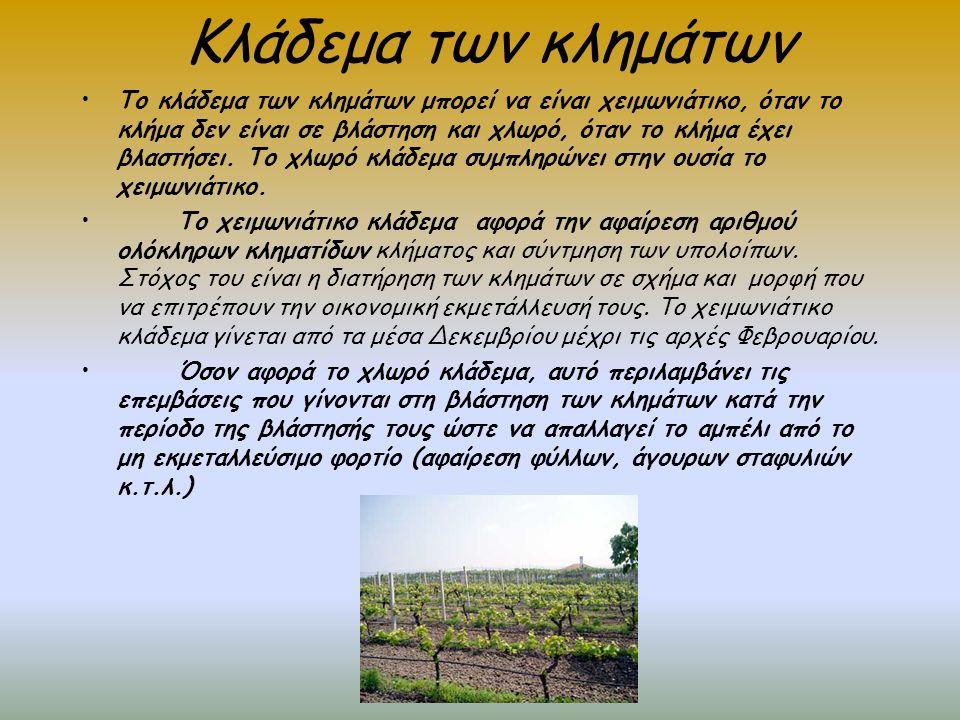Συντήρηση παραγωγικότητας εδάφους αμπελώνα Πρόκειται για τις απαραίτητες διεργασίες που στόχο έχουν τη δημιουργία εδάφους, ικανού να προσδώσει μακροχρόνιες καλλιέργειες.