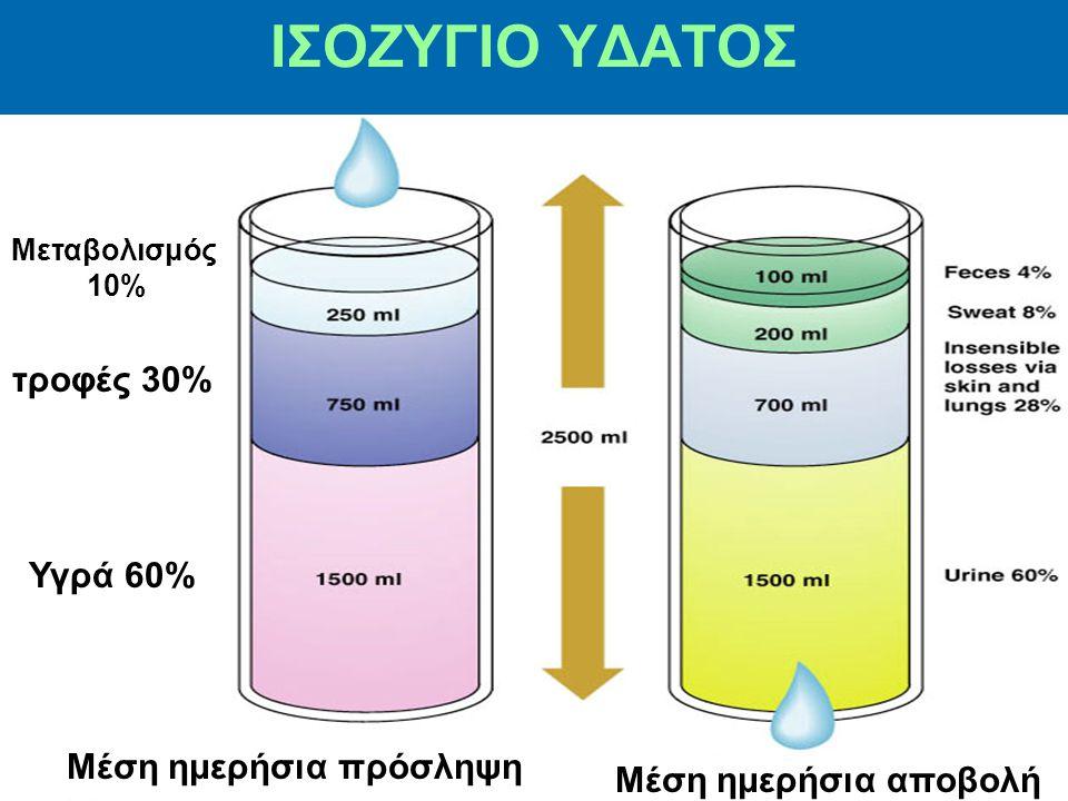 ΙΣΟΖΥΓΙΟ ΥΔΑΤΟΣ Μεταβολισμός 10% τροφές 30% Υγρά 60% Μέση ημερήσια πρόσληψη Μέση ημερήσια αποβολή
