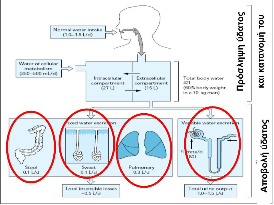 Πρόσληψη ύδατοςκαι κατανομή του Αποβολή ύδατος