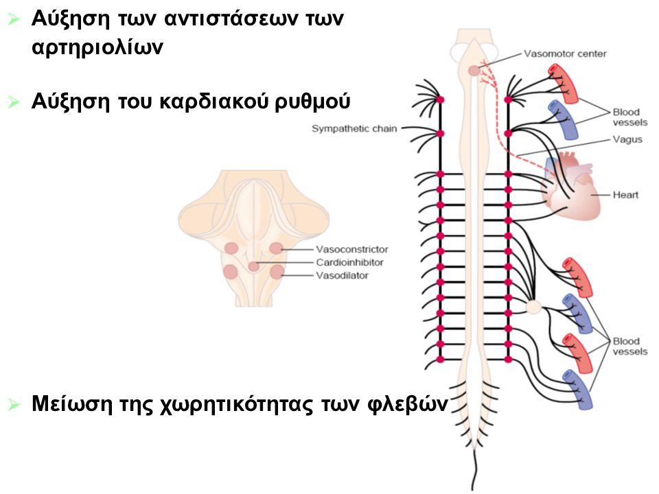  Αύξηση των αντιστάσεων των αρτηριολίων  Αύξηση του καρδιακού ρυθμού  Μείωση της χωρητικότητας των φλεβών