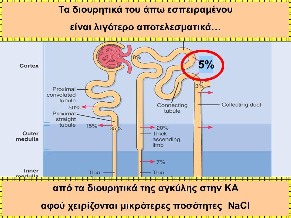 5% από τα διουρητικά της αγκύλης στην ΚΑ αφού χειρίζονται μικρότερες ποσότητες NaCl Τα διουρητικά του άπω εσπειραμένου είναι λιγότερο αποτελεσματικά…