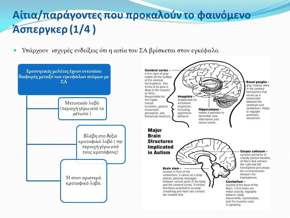 Αίτια/παράγοντες που προκαλούν το φαινόμενο Άσπεργκερ (1/4 ) Υπάρχουν ισχυρές ενδείξεις ότι η αιτία του ΣΑ βρίσκεται στον εγκέφαλο. Ερευνητικές μελέτε