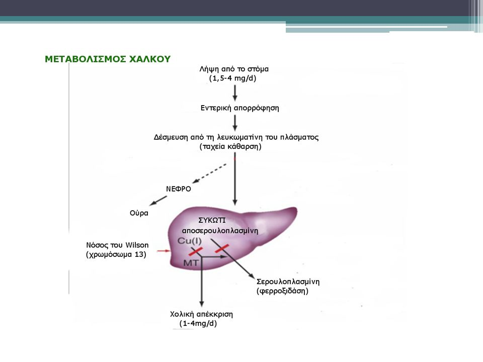 Ψευδάργυρος Επαγωγέας της μεταλλοθειονίνης, εμποδίζει την εντερική απορρόφηση του χαλκού Αρχική δόση: 50 mg για ενήλικες Παρενέργειες:  Γαστρίτιδα  Αύξηση του ψευδαργύρου  Πιθανές αλλαγές στο ανοσοποιητικό  Νευρολογικές διαταραχές είναι πιθανό να συμβούν στο αρχικό στάδιο.