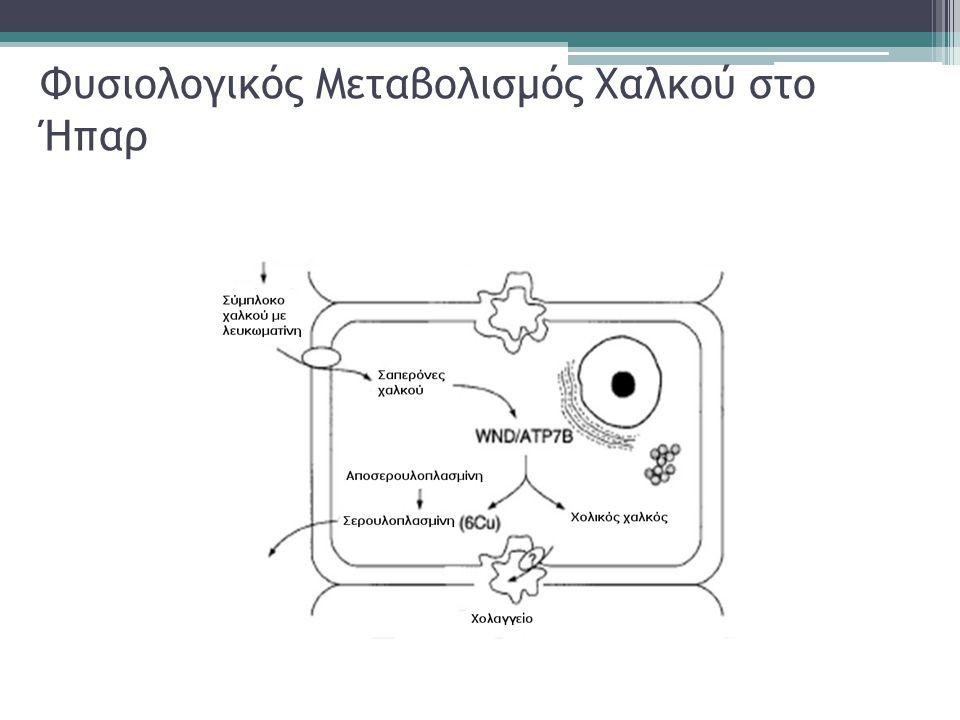 Φυσιολογικός Μεταβολισμός Χαλκού στο Ήπαρ