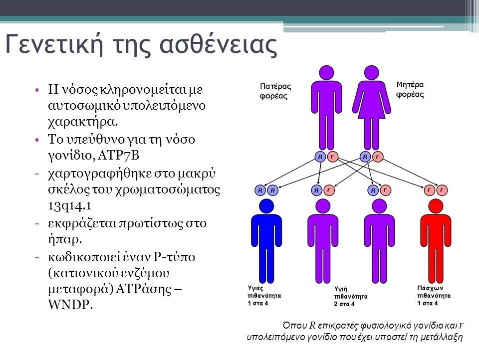 Γενετική της ασθένειας Η νόσος κληρονομείται με αυτοσωμικό υπολειπόμενο χαρακτήρα. Το υπεύθυνο για τη νόσο γονίδιο, ATP7B -χαρτογραφήθηκε στο μακρύ σκ