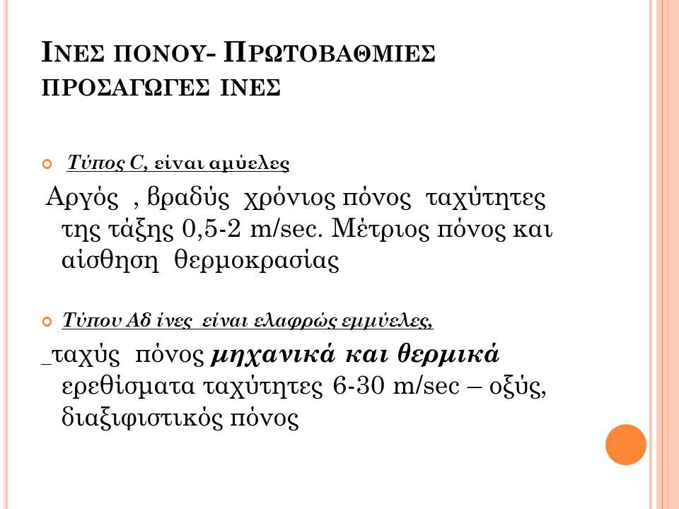 Ι ΝΕΣ ΠΟΝΟΥ - Π ΡΩΤΟΒΑΘΜΙΕΣ ΠΡΟΣΑΓΩΓΕΣ ΙΝΕΣ Τύπος C, είναι αμύελες Αργός, βραδύς χρόνιος πόνος ταχύτητες της τάξης 0,5-2 m/sec. Μέτριος πόνος και αίσθ
