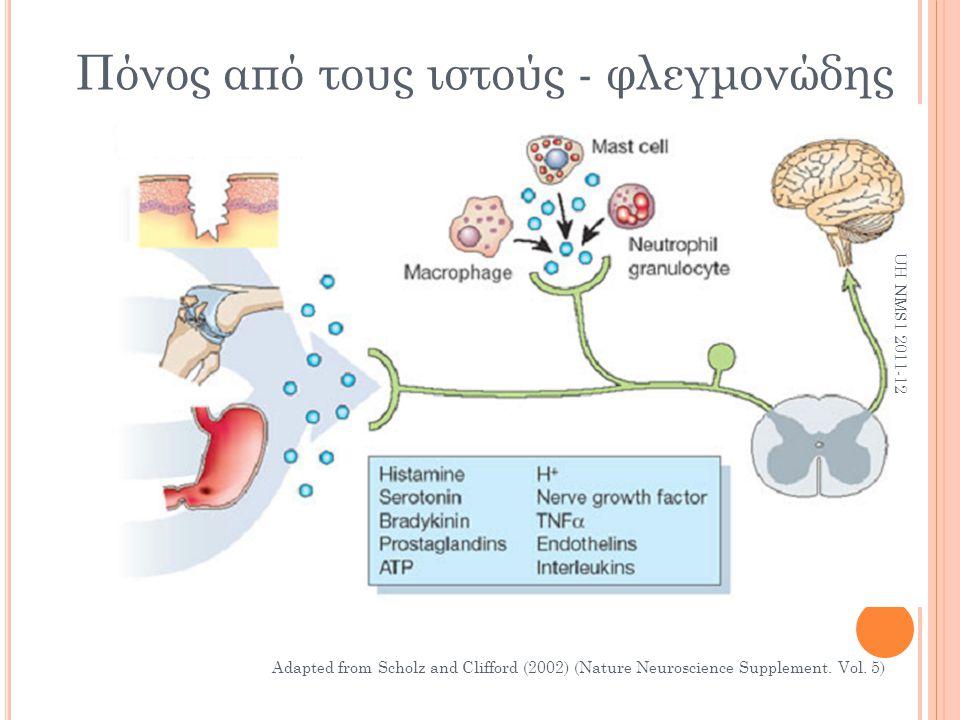 Πόνος από τους ιστούς - φλεγμονώδης Adapted from Scholz and Clifford (2002) (Nature Neuroscience Supplement. Vol. 5) UH NMS1 2011-12
