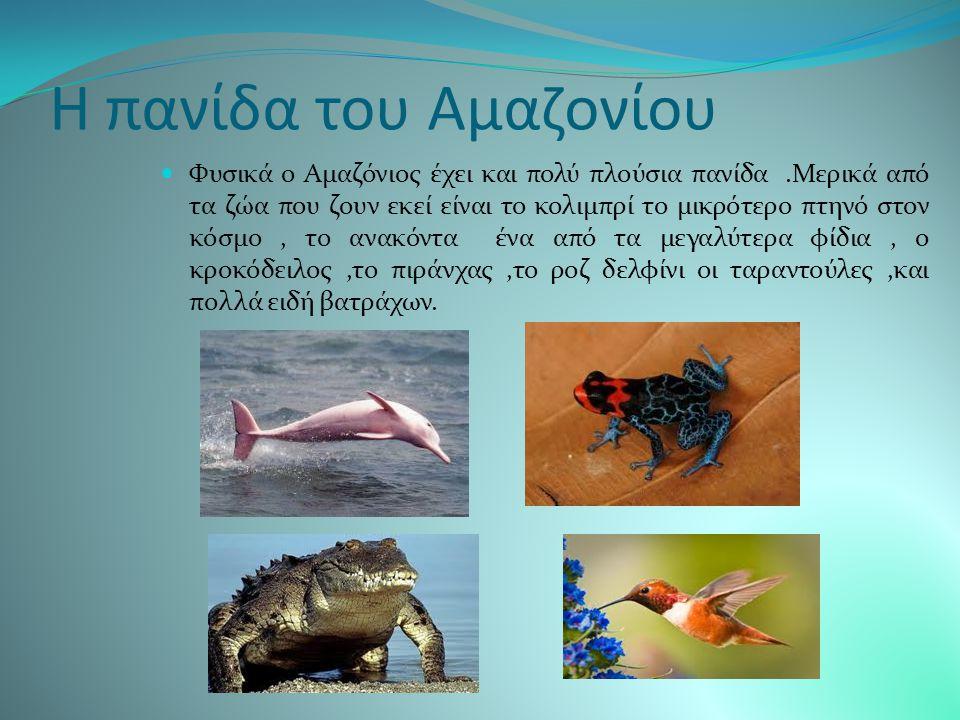 Η χλωρίδα του Αμαζονίου Ένας τόσο μεγάλος υδροβιότοπος δεν είναι δυνατόν να μην έχει μεγάλη ζωική και φυτική διάπλαση.