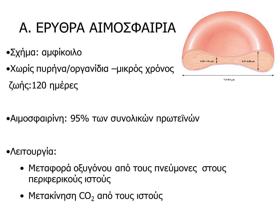 Α. ΕΡΥΘΡΑ ΑΙΜΟΣΦΑΙΡΙΑ Σχήμα: αμφίκοιλο Χωρίς πυρήνα/οργανίδια –μικρός χρόνος ζωής:120 ημέρες Αιμοσφαιρίνη: 95% των συνολικών πρωτεϊνών Λειτουργία: Μετ