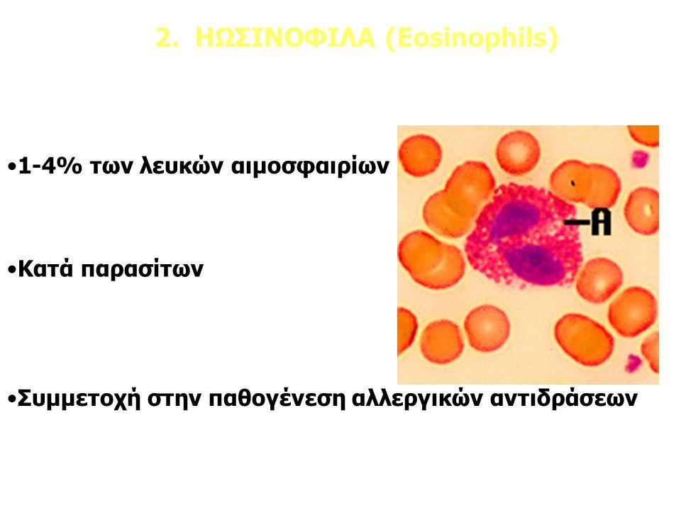 2. ΗΩΣΙΝΟΦΙΛΑ (Eosinophils) 1-4% των λευκών αιμοσφαιρίων Κατά παρασίτων Συμμετοχή στην παθογένεση αλλεργικών αντιδράσεων