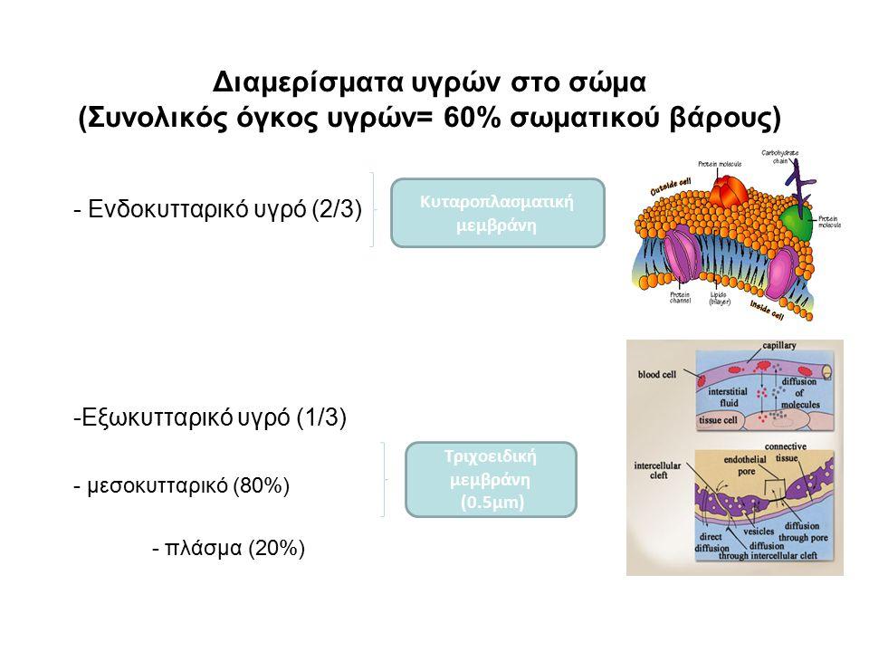 Διαμερίσματα υγρών στο σώμα (Συνολικός όγκος υγρών= 60% σωματικού βάρους) - Ενδοκυτταρικό υγρό (2/3) -Εξωκυτταρικό υγρό (1/3) - μεσοκυτταρικό (80%) -