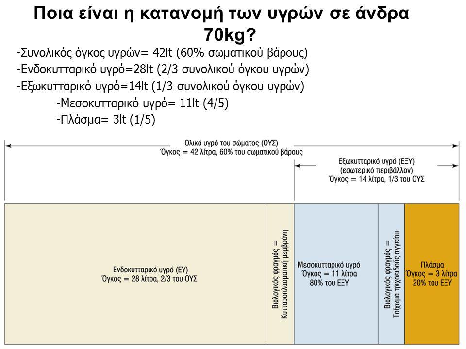 Ποια είναι η κατανομή των υγρών σε άνδρα 70kg? -Συνολικός όγκος υγρών= 42lt (60% σωματικού βάρους) -Ενδοκυτταρικό υγρό=28lt (2/3 συνολικού όγκου υγρών