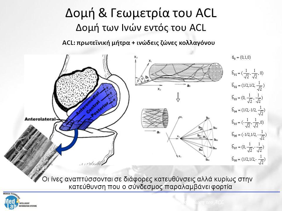 Δομή & Γεωμετρία του ACL Δομή των Ινών εντός του ACL ACL: πρωτεϊνική μήτρα + ινώδεις ζώνες κολλαγόνου Οι ίνες αναπτύσσονται σε διάφορες κατευθύνσεις α
