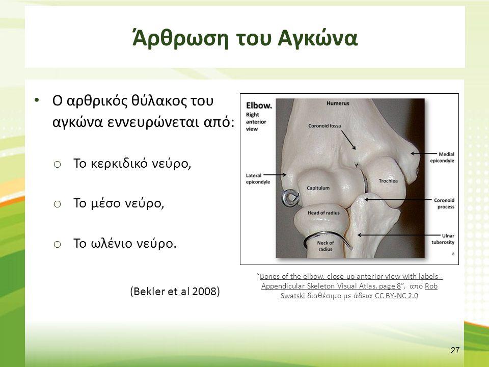 """Άρθρωση του Αγκώνα O αρθρικός θύλακος του αγκώνα εννευρώνεται από: o Το κερκιδικό νεύρο, o Το μέσο νεύρο, o Το ωλένιο νεύρο. (Bekler et al 2008) 27 """"B"""