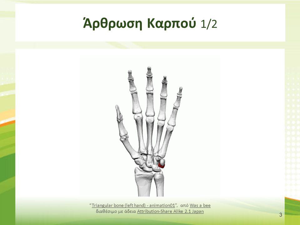 Άρθρωση Καρπού 1/2 3 Triangular bone (left hand) - animation01 , από Was a bee διαθέσιμο με άδεια Attribution-Share Alike 2.1 JapanTriangular bone (left hand) - animation01Was a beeAttribution-Share Alike 2.1 Japan