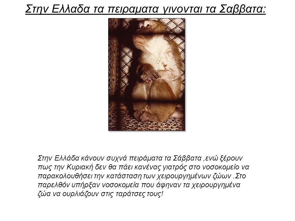 Στην Ελλαδα τα πειραματα γινονται τα Σαββατα: Στην Ελλάδα κάνουν συχνά πειράματα τα Σάββατα,ενώ ξέρουν πως την Κυριακή δεν θα πάει κανένας γιατρός στο νοσοκομείο να παρακολουθήσει την κατάσταση των χειρουργημένων ζώων.Στο παρελθόν υπήρξαν νοσοκομεία που άφηναν τα χειρουργημένα ζώα να ουρλιάζουν στις ταράτσες τους!