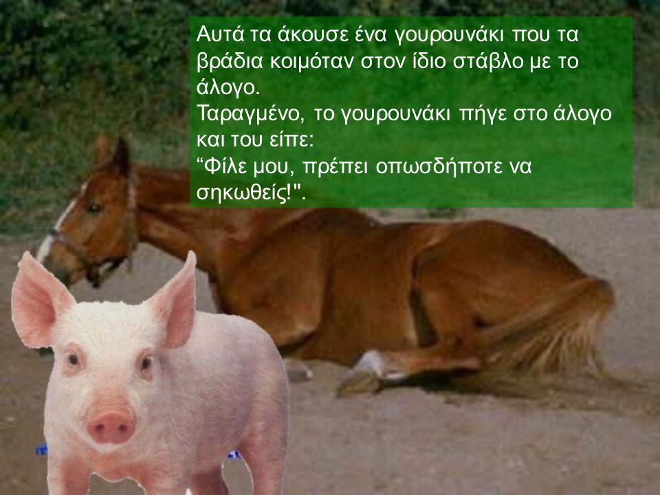 """Αυτά τα άκουσε ένα γουρουνάκι που τα βράδια κοιμόταν στον ίδιο στάβλο με το άλογο. Ταραγμένο, το γουρουνάκι πήγε στο άλογο και του είπε : """" Φίλε μου,"""