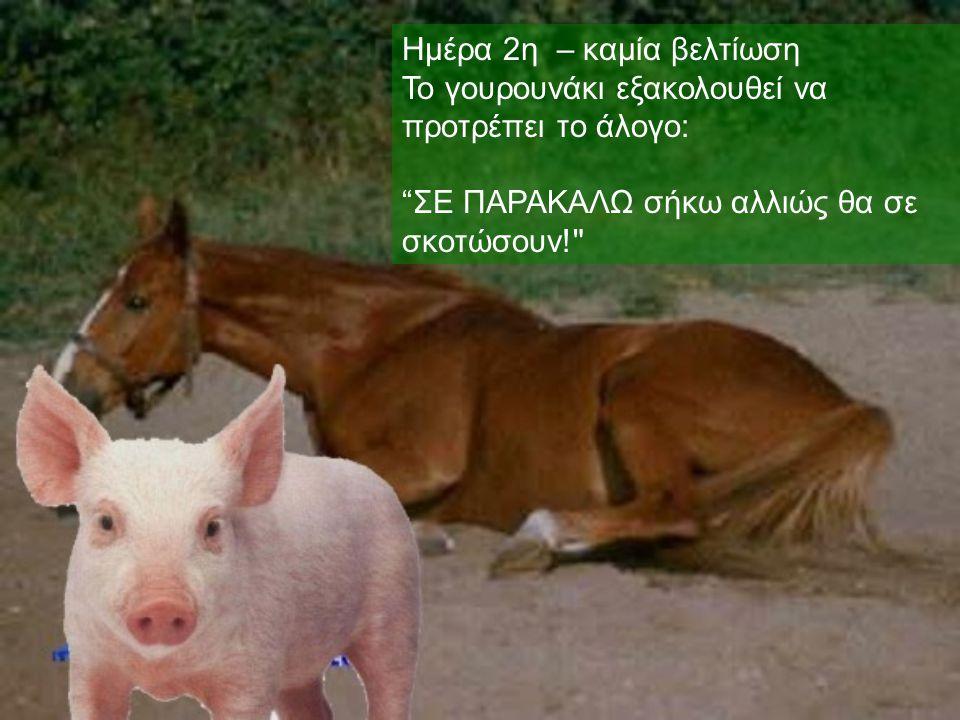 """Ημέρα 2η – καμία βελτίωση Το γουρουνάκι εξακολουθεί να προτρέπει το άλογο : """" ΣΕ ΠΑΡΑΚΑΛΩ σήκω αλλιώς θα σε σκοτώσουν!"""