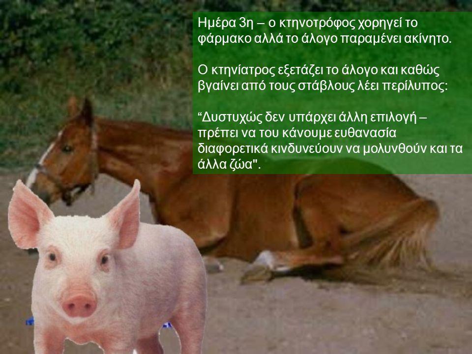 Ημέρα 3η – ο κτηνοτρόφος χορηγεί το φάρμακο αλλά το άλογο παραμένει ακίνητο. Ο κτηνίατρος εξετάζει το άλογο και καθώς βγαίνει από τους στάβλους λέει π