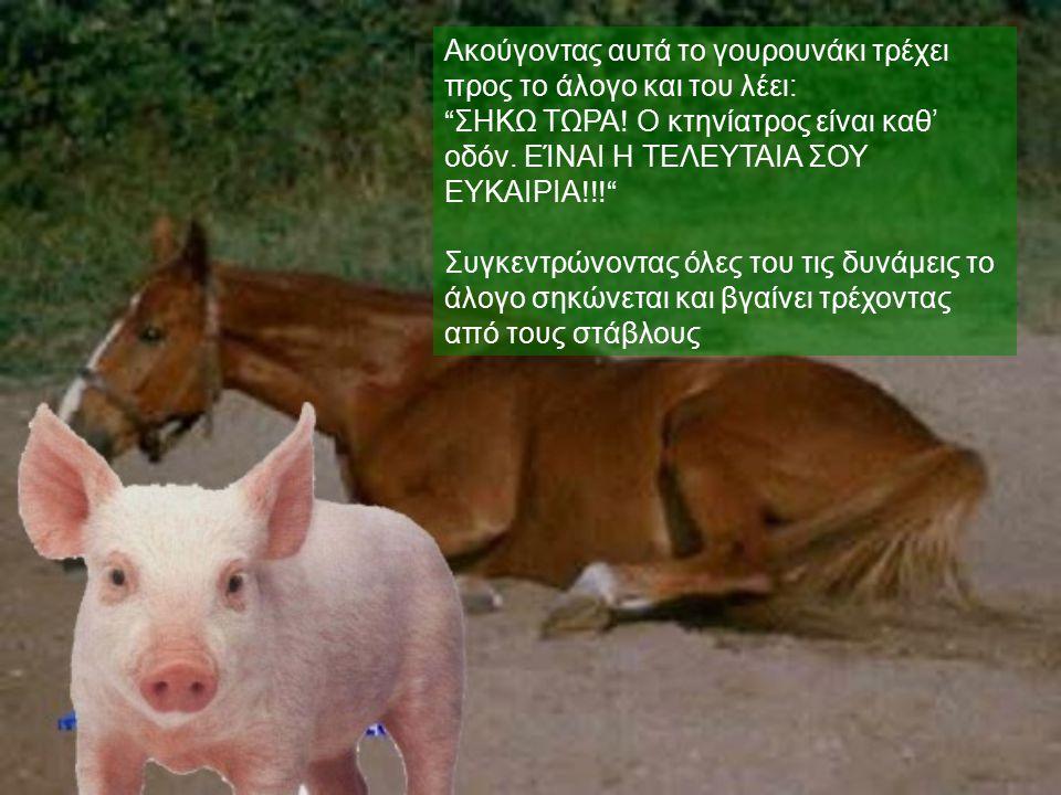 """Ακούγοντας αυτά το γουρουνάκι τρέχει προς το άλογο και του λέει: """" ΣΗΚΩ ΤΩΡΑ ! Ο κτηνίατρος είναι καθ' οδόν. ΕΊΝΑΙ Η ΤΕΛΕΥΤΑΙΑ ΣΟΥ ΕΥΚΑΙΡΙΑ !!!"""" Συγκε"""