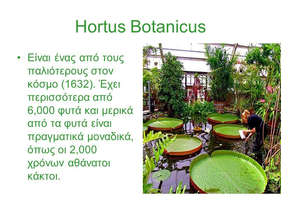 Hortus Botanicus Είναι ένας από τους παλιότερους στον κόσμο (1632).