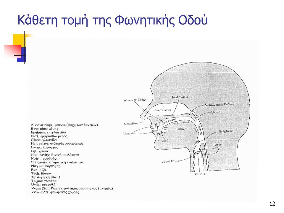 12 Κάθετη τομή της Φωνητικής Οδού