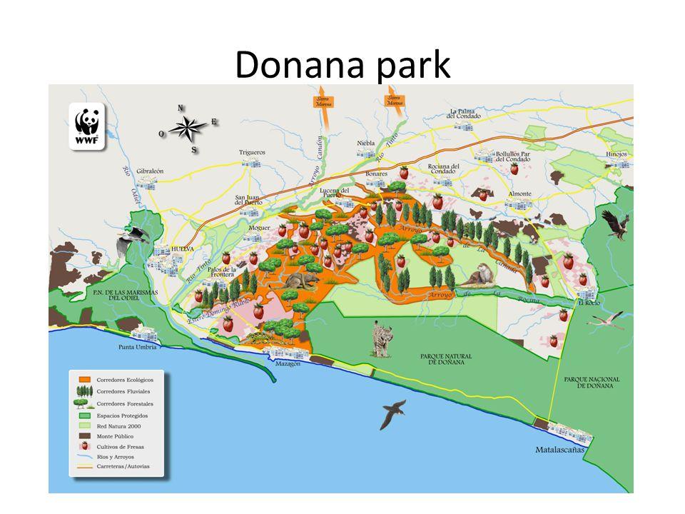 Donana park