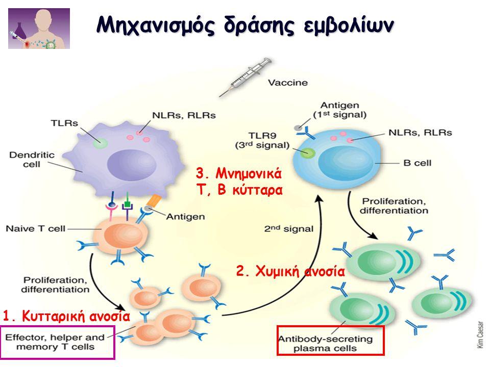 Μηχανισμός δράσης εμβολίων 3. Μνημονικά Τ, Β κύτταρα 2. Χυμική ανοσία 1. Κυτταρική ανοσία