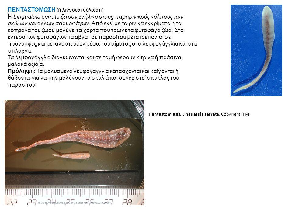 ΠΕΝΤΑΣΤΟΜΩΣΗ (ή λιγγουατούλωση) Η Linguatula serrata ζει σαν ενήλικο στους παραρινικούς κόλπους των σκύλων και άλλων σαρκοφάγων.