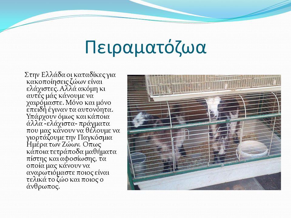 Πειραματόζωα Στην Ελλάδα οι καταδίκες για κακοποίησεις ζώων είναι ελάχιστες.